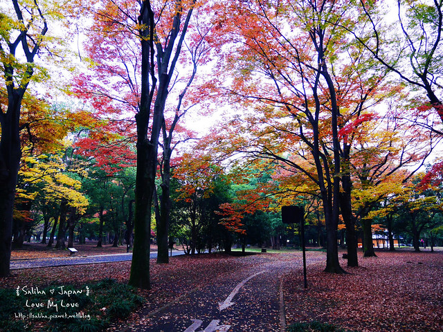 日本東京景點澀谷區代代木公園賞楓葉 (8)