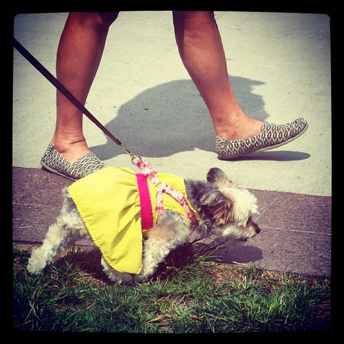 Why wouldn't your dog wear a sun dress? I mean, the sun's out isn't it? #TasteofOtR #WashingtonPark