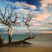 Sunset lit Tree at Ukumehame Beach Park by Rex Maximilian