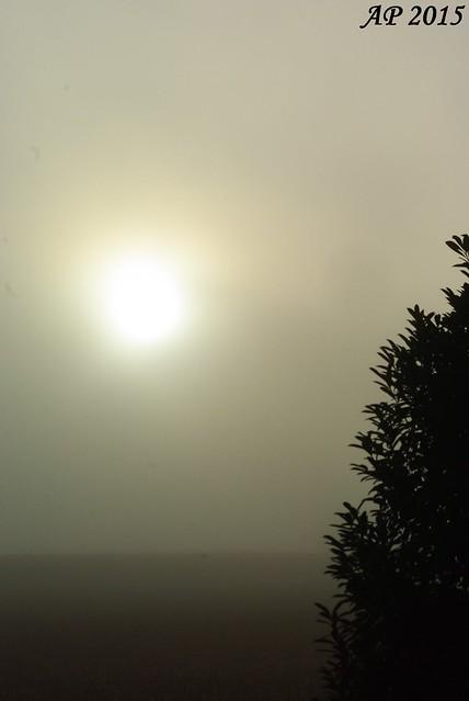 Brouillard matinal / Morning Mist
