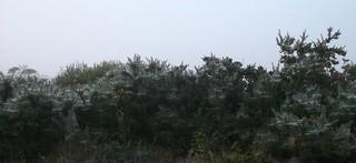 Tangled webs. 02.10.15