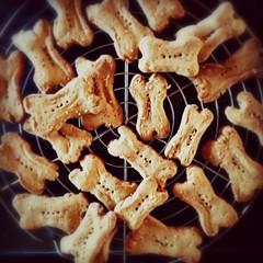 Home-made dog cookies