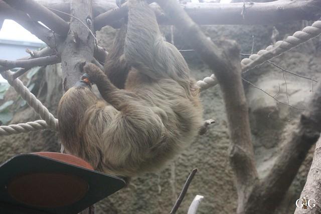 Besuch Zoo Rostock 17.10.201554