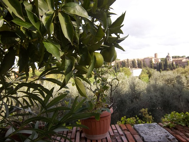 Lemons and a view, San Bonaventura al Palatino