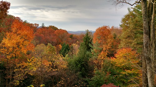 autumn color fall leaves asheville blueridge wnc