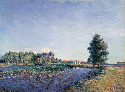 葦の川辺─夕日