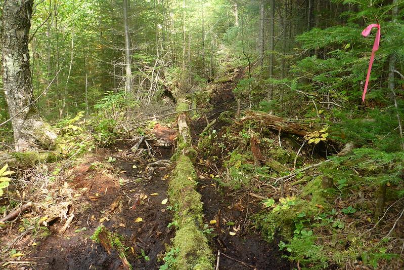 Tricky Trails