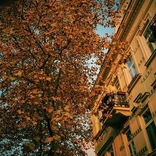 Herbstmorgen, Mödling Brühlerstrasse