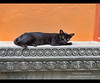 Cat sleeping at the temple, Siem Reap, Cambodia