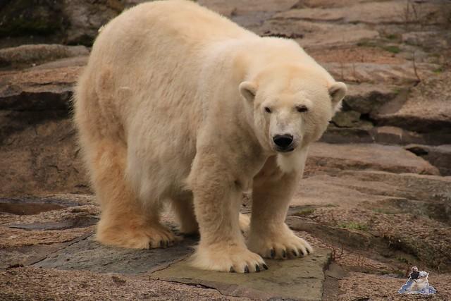 Zoo Berlin 06.12.2015    0104