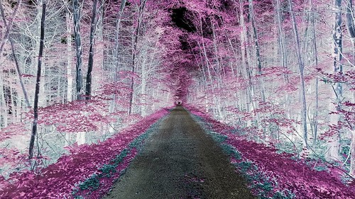 road trees nature photography samsung infrared dirtroad gravelroad photooftheday samsungs6 saltydogphoto
