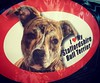 Staffies :heart:️:dog: #cidadedocabo #capetown #southafrica #africadosul #staffie #dog
