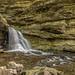 Forgotton Falls