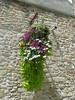 Fleur de passage by tortuesoleil