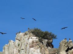 Parque Nacional de Monfragüe: Mezi supy