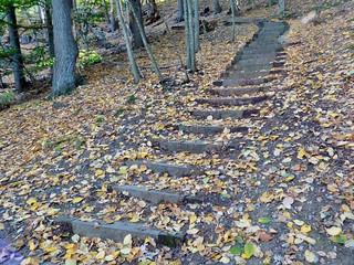 Leaf-strewn stairs