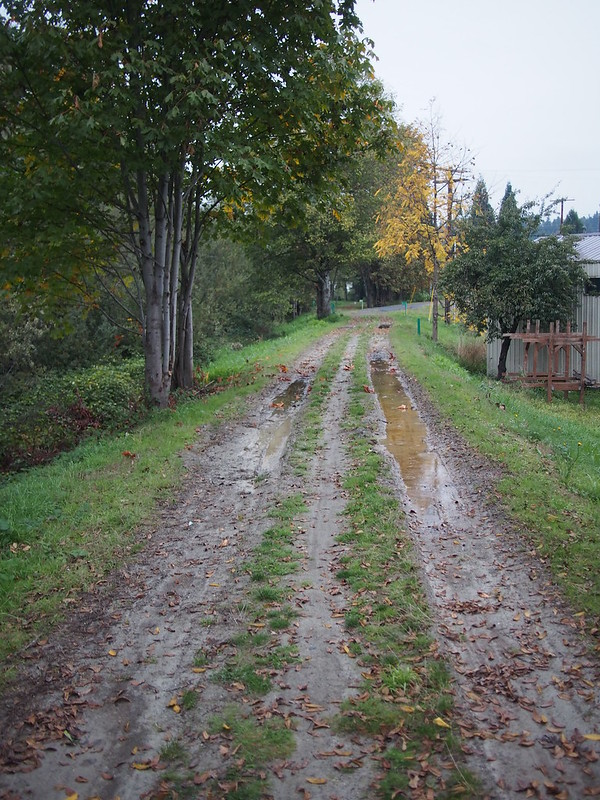 Green River Trail Dual-Track: The trail devolves into this for a while in Kent.