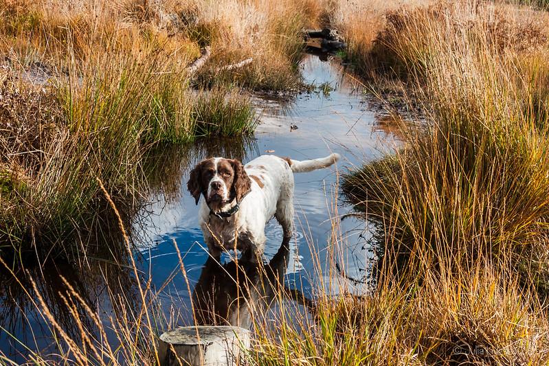 Max in the stream