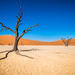 Trees of solitude, Sossusvlei Namibia by Simon van Ooijen