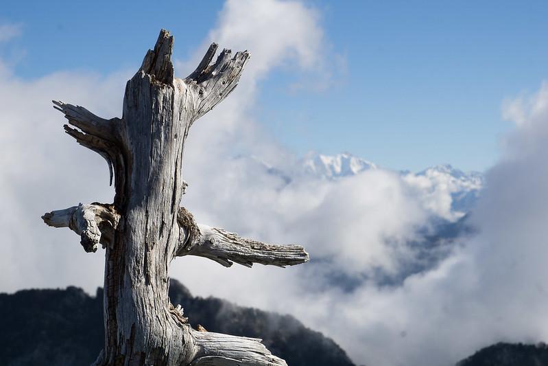 Sentinelle du sommet