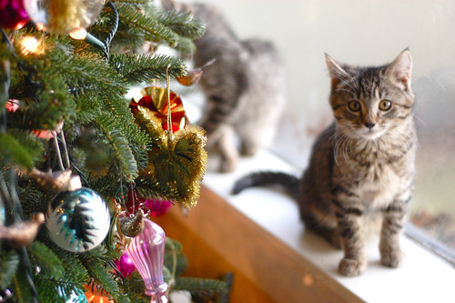 Kittens (and Puppies) at Christmas