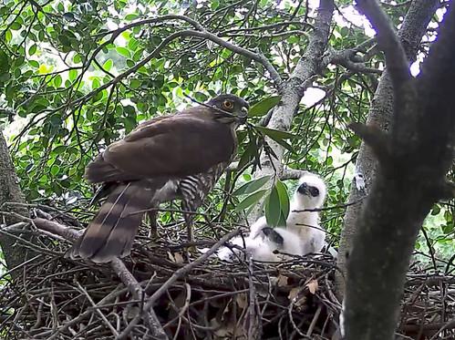 監視器影像。圖片來源:台灣猛禽研究會。