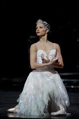 Francesca Hayward as a Swan in Swan Lake, The Royal Ballet