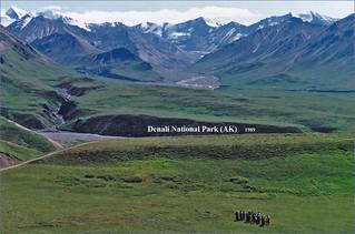 Denali National Park (AK) -- July 1989