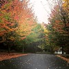 I just adore fall in Seattle #Fall #FallColors #FallWeather #Seattle #WA #Redmond