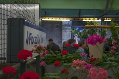 Piccadilly Line flowers