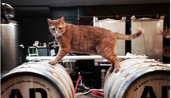 feral-cats-guard-distillery-chicago