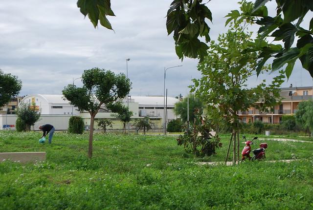 Rutigliano-Al parco nessuno 'si fa' l'erba (4)
