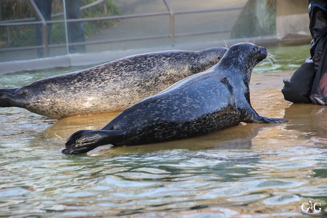 Besuch im Berliner Zoo 06.12.201556