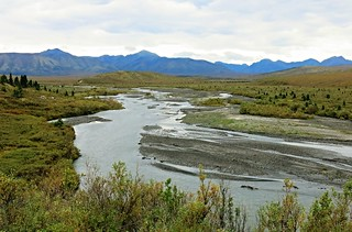 Denali NP ~ Tundra Wilderness Tour