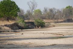 malawi 497