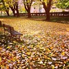 Ninguna flor / la hojarasca en el parque /  desparramada. (Cecilia Lunnisso )http://destellosdehaijin.blogspot.com.es/2014/12/100-haikus-y-pico-de-otono-haijines.html?m=1