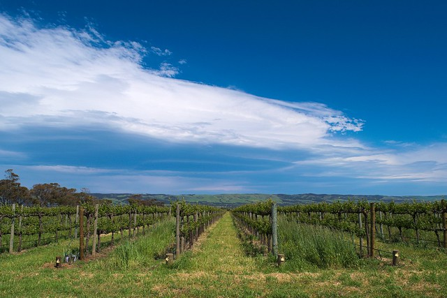 Featured medium photo of McLaren Vale on TripHappy's travel guide