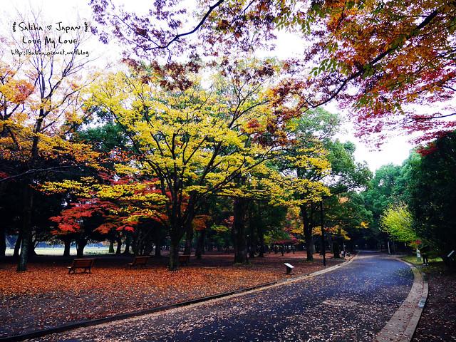 日本東京景點澀谷區代代木公園賞楓葉 (9)