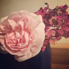 Once again: the very very last roses of 2016 :-). Encore une fois, les toutes dernières roses de cette année... #lagrossetalle #roses #france_focus_on