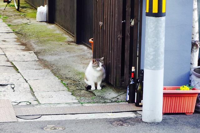 Today's Cat@2016-12-05