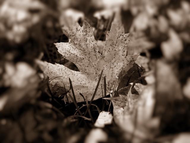 yellow blk wht leaf