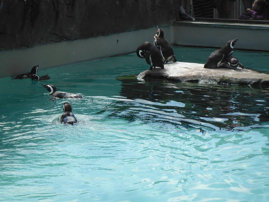 Penguins 3