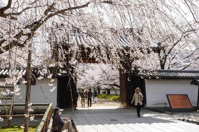 0402D8京都醍醐寺-1160252