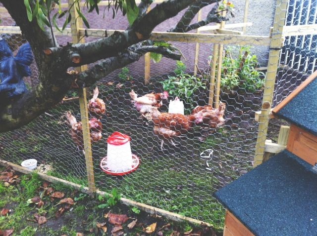 vivatramp lifestyle blog uk chickens photo an hour