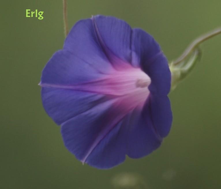 Some flower. Sony A7II & Sigma 70-300 APO.