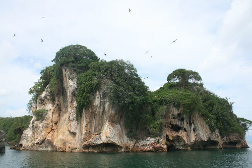 26 - Los Haitises national park - breeding island / Los Haitises Nationalpark - Brutinsel