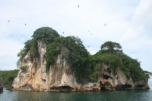 26 - Los Haitises national park - breeding island / Los Haitises Nationalpark - Brutinsel