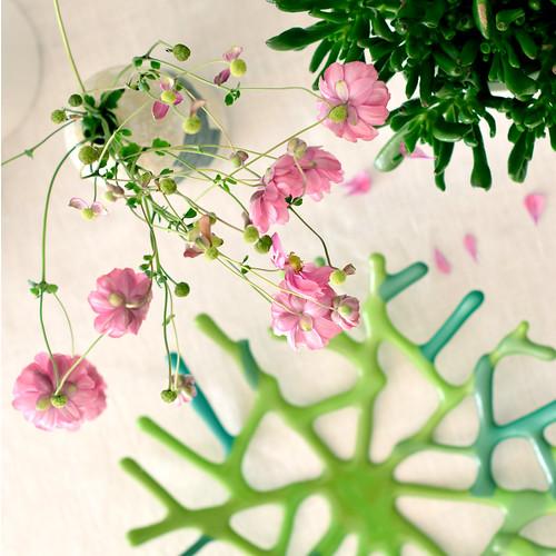plants-flowers03
