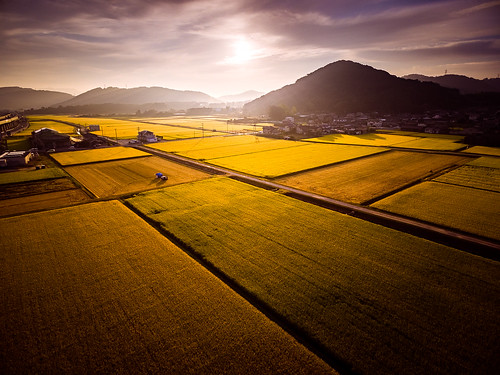 autumn mountain field japan sunrise river landscape scenery rice natural asahi harvest 日本 秋 自然 山 風景 okayama 景色 川 岡山 日の出 稲 phantom3 朝日 田 収穫 dji 河川 photones