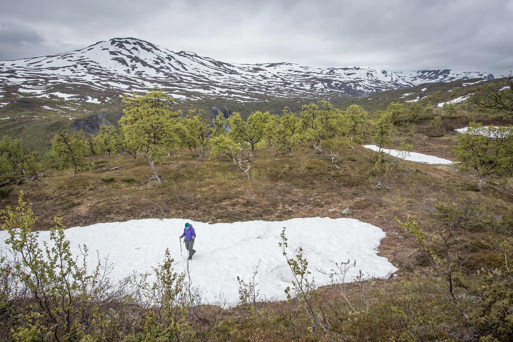 Exploring the Rohkunborri National Park. Lappland. Troms. Norway. #6monthspregnantinpicture